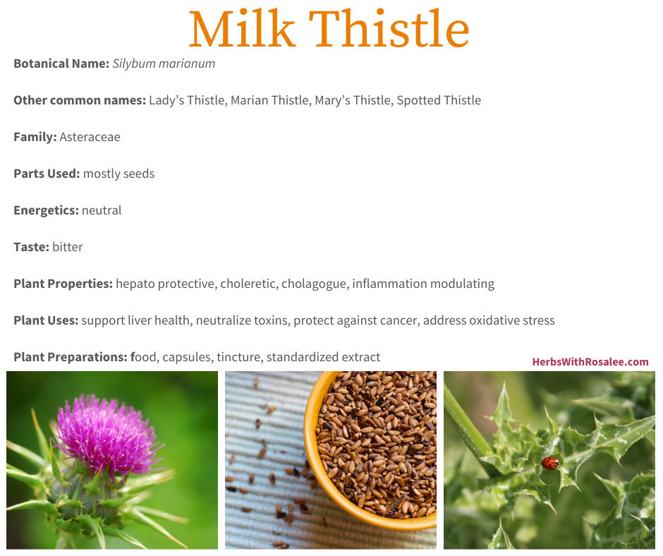 Milk Thistle Medicinal Uses