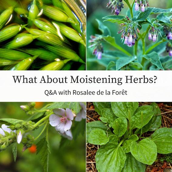 Damp Herbs