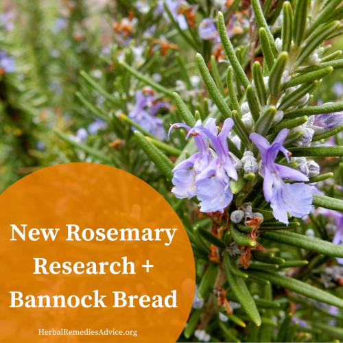 Rosemary Bannock Recipe