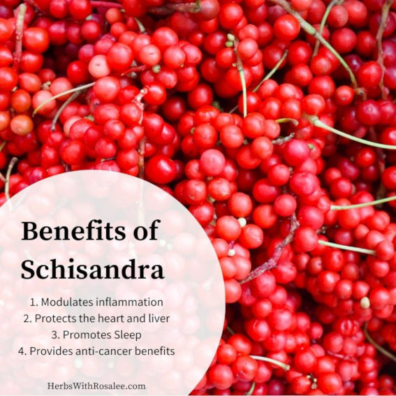 schisandra benefits