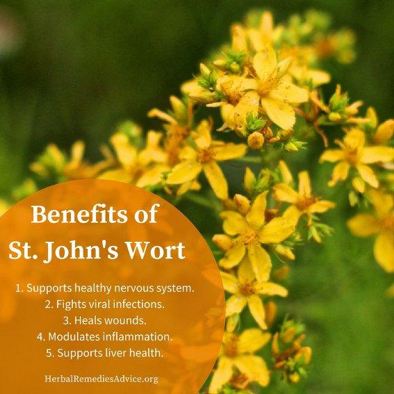st johns wort uses