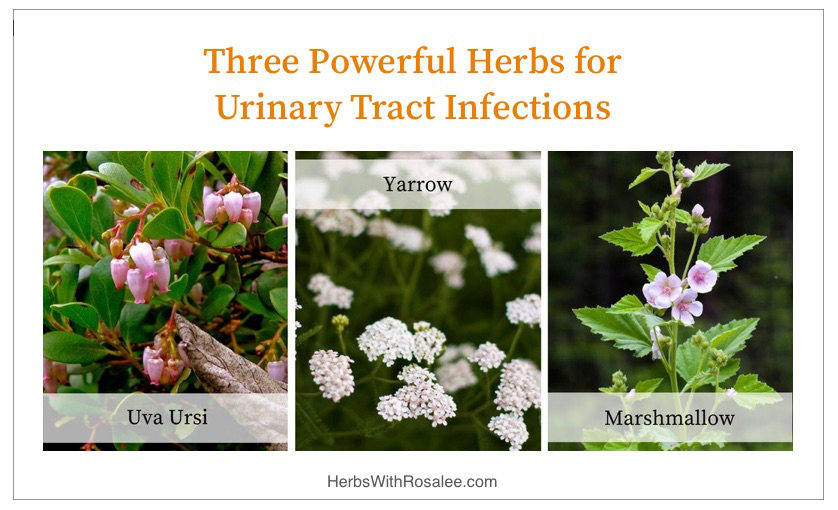Herbs for Urinary Tract Infections